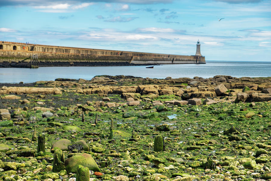 Bird Photograph - Tynemouth Pier Landscape In Color 2 by Iordanis Pallikaras