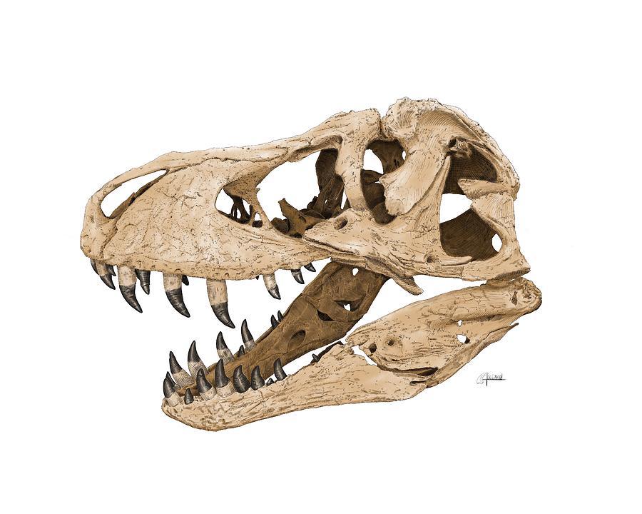 Tyrannosaurus Skull by Rick Adleman