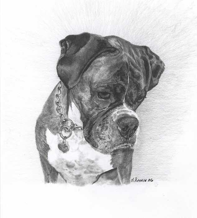 Dogs Drawing - Tyson by Marlene Piccolin