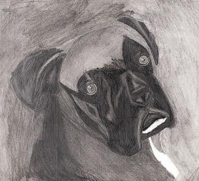 Boxer Drawing - Tyson by Tara Kearce