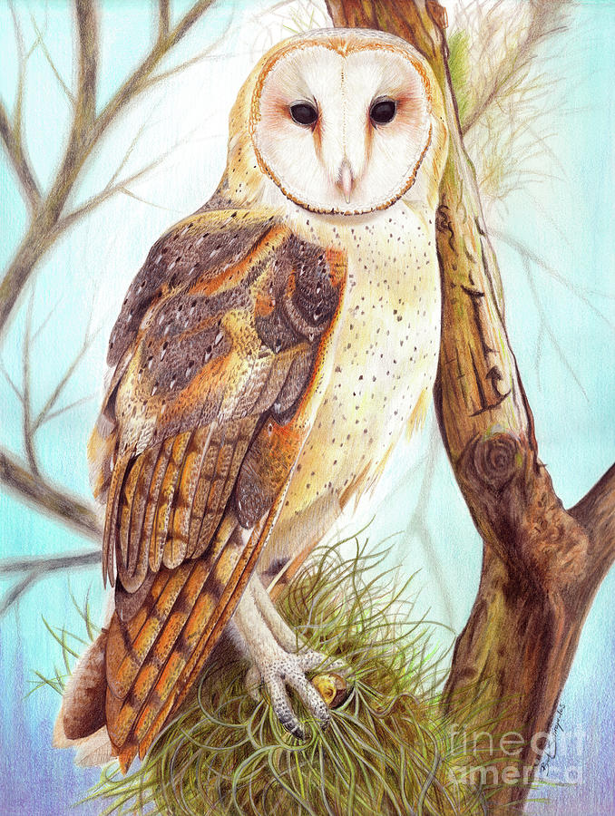 Tyto Alba Drawing By Barb Sotiropoulos