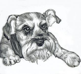 Dog Drawing - Ugly Dawg by Tiffany Everett