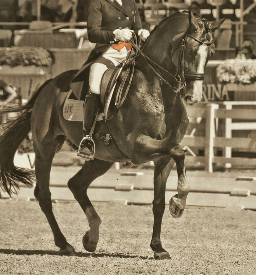 Dressage Photograph - Ultimate by JAMART Photography