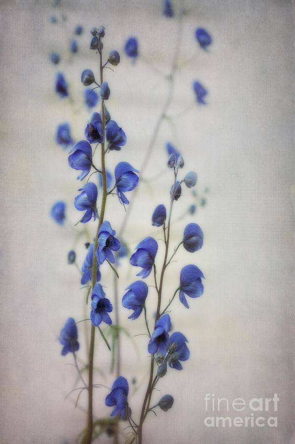 Ultramarine Photograph - Ultramarine  by Priska Wettstein