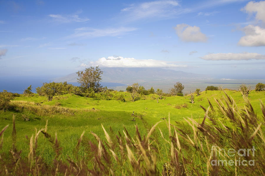 Afternoon Photograph - Ulupalakua Landscape by Ron Dahlquist - Printscapes