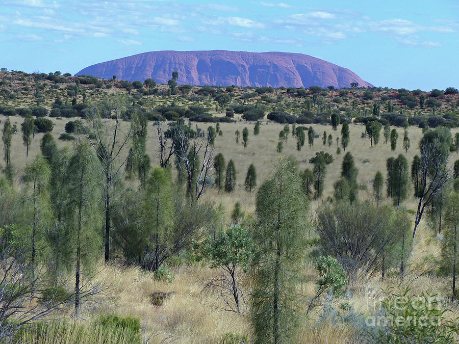 Uluru from the bush by Phil Banks