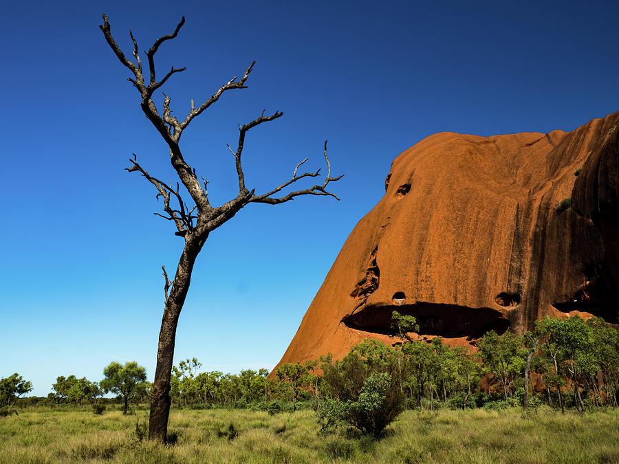 Uluru Tree by Walt Sterneman