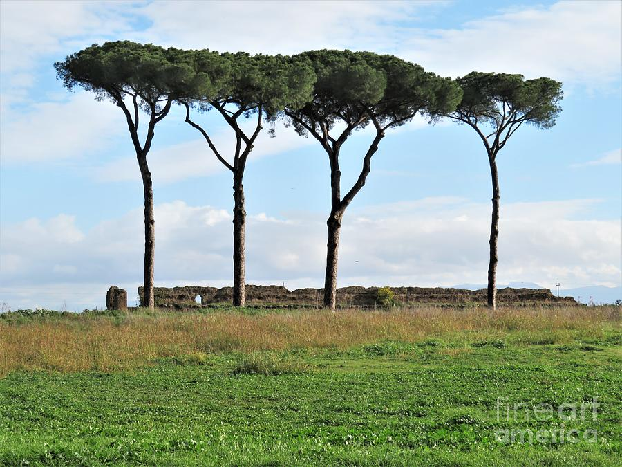Rome Photograph - Umbrella Pines by Laurie Morgan