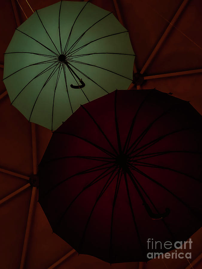 Umbrellas by Camille Pascoe