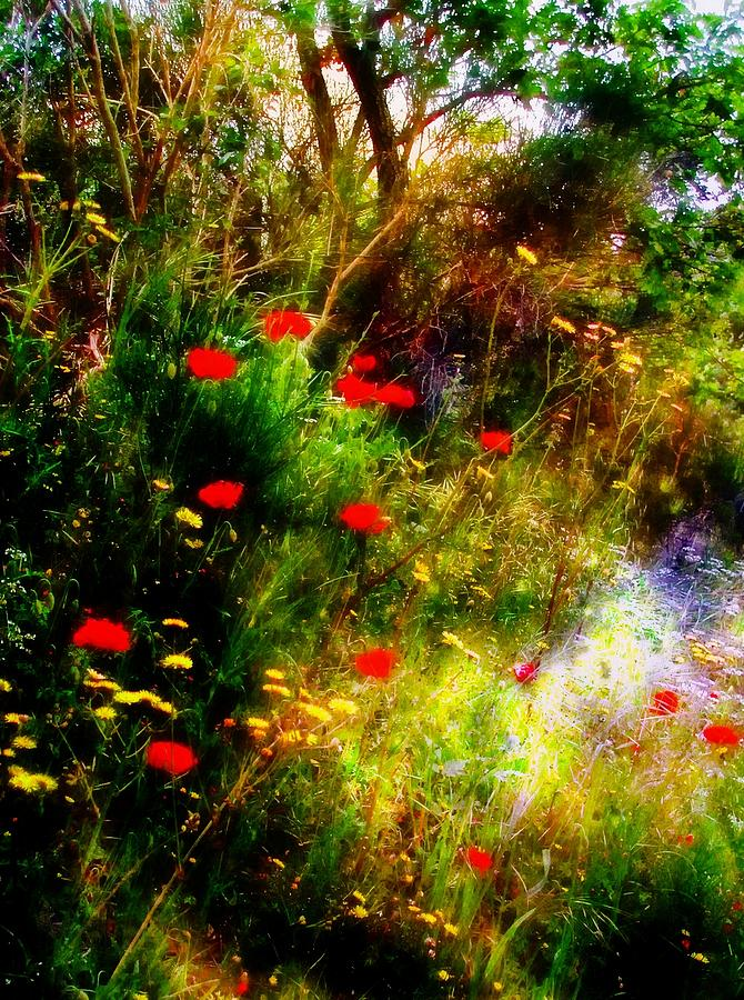 Red Photograph - Umbrian Wild Flowers 3 by Dorothy Berry-Lound