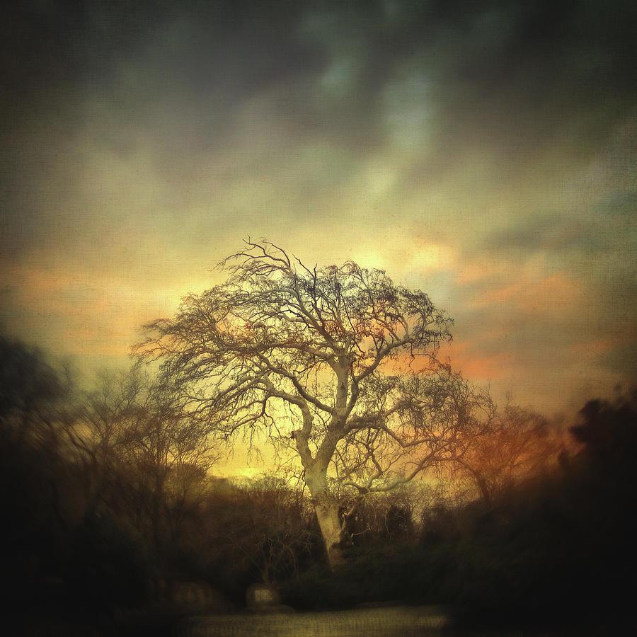 Tree Photograph - Un Dernier Crepuscule by Zapista Zapista