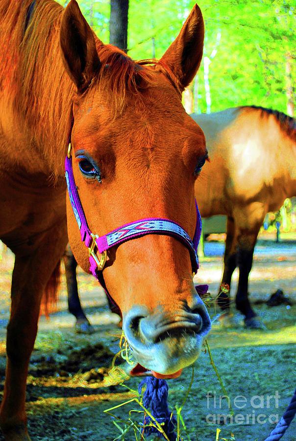 Horse Photograph - Uncle John by Jost Houk