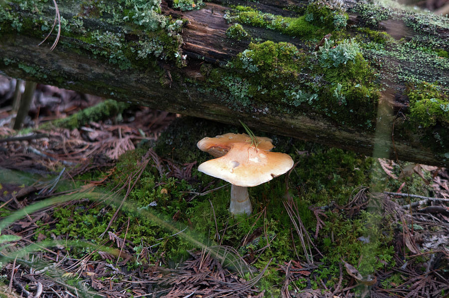 Under A Log Photograph