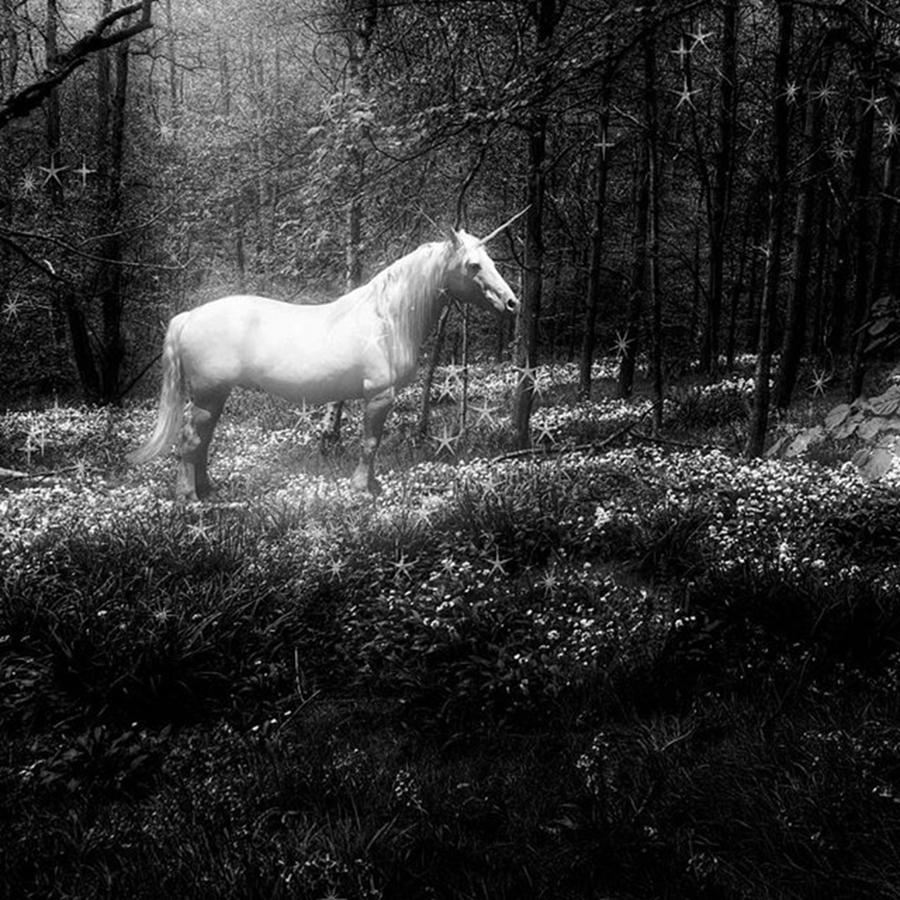 Moonlight Photograph - Under A Moonlit Sky  #fantasy #unicorn by John Edwards