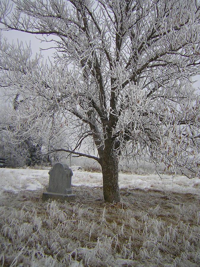 Rural Photograph - Under A Shade Tree by Deena Keller