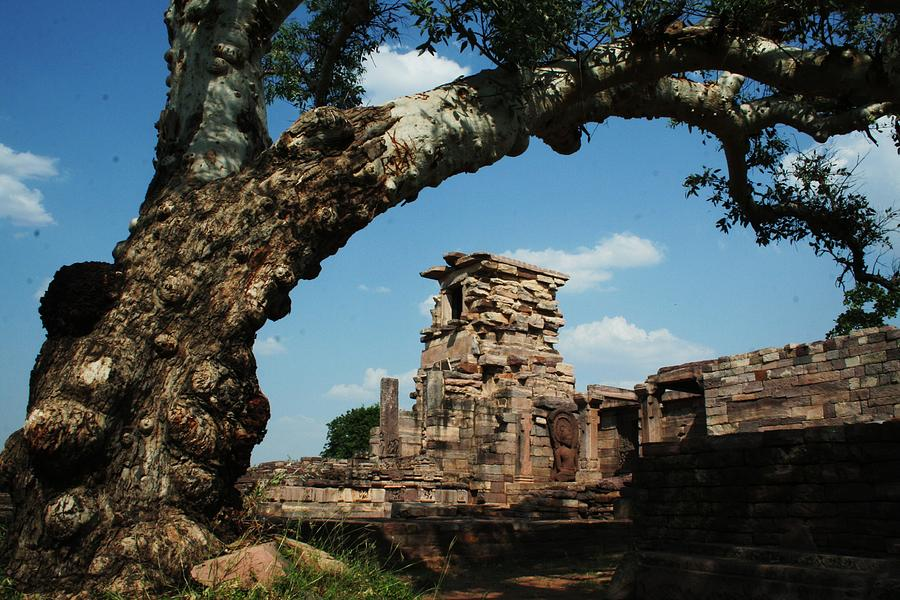 Sanchi Photograph - Under The Bodhi Tree by Mohammed Nasir