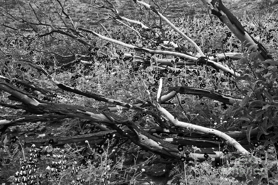 Landscape Photograph - Under The Charred Laurel Sumac by Greg Clure