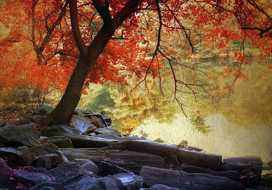 Tree Photograph - Under The Maple by Jessica Jenney
