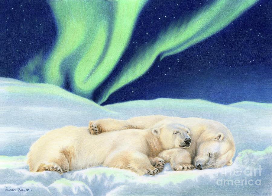 Polar Bears Drawing - Under The Northern Lights by Sarah Batalka