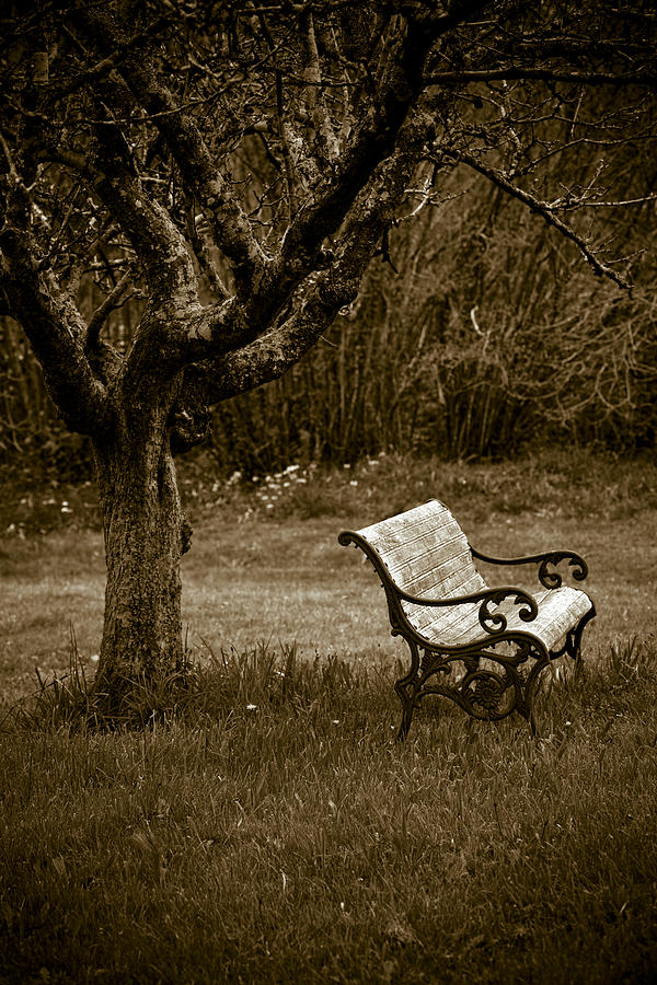 Apple Tree Photograph - Under The Old Apple Tree by Frank Tschakert