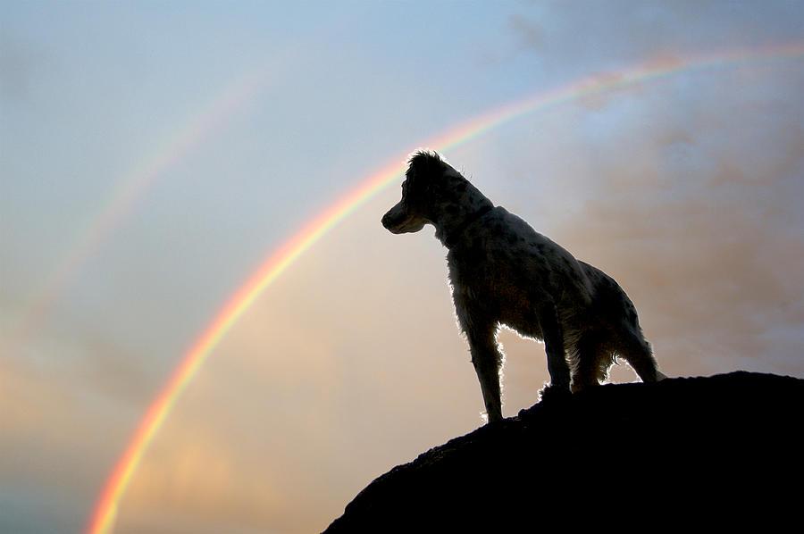 Nature Photograph - Under A  Rainbow by Zayne Diamond Photographic