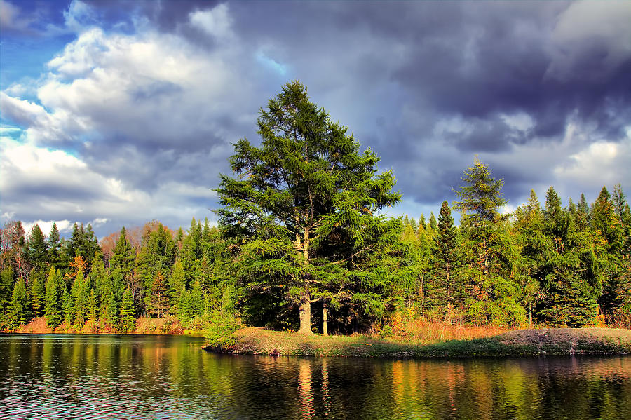 River Photograph - Under The Shade Tree by Gary Smith