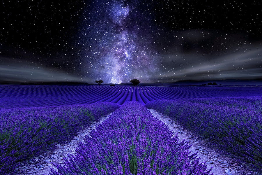 Night Photograph - Under The Stars by Jorge Maia