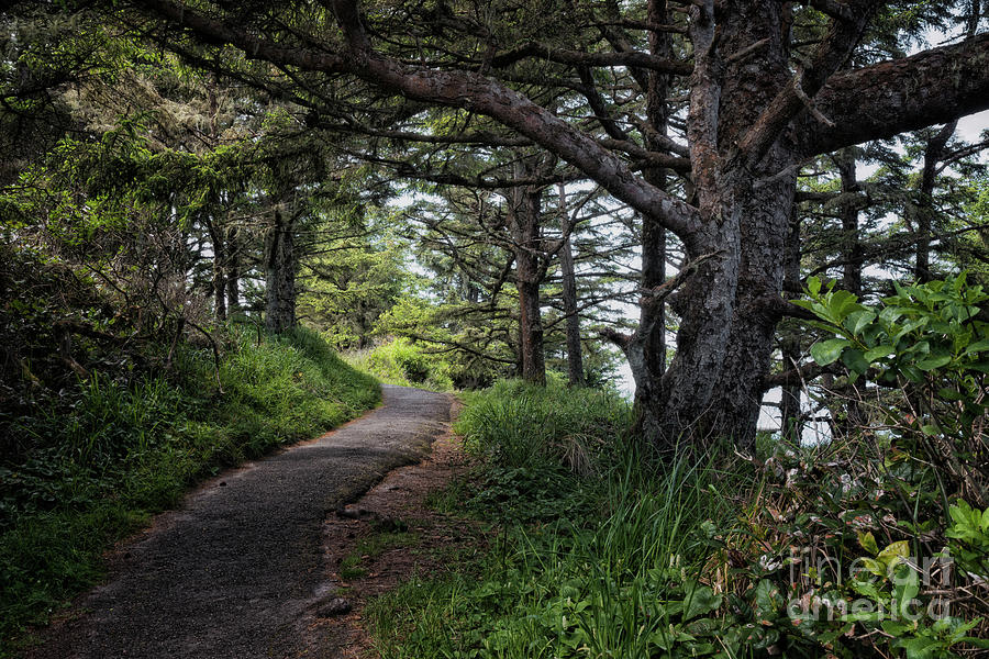 Under The Trees On North Cove Trail by Al Andersen