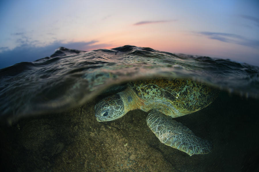 Turtle Photograph - Under The Wave by Andrey Narchuk