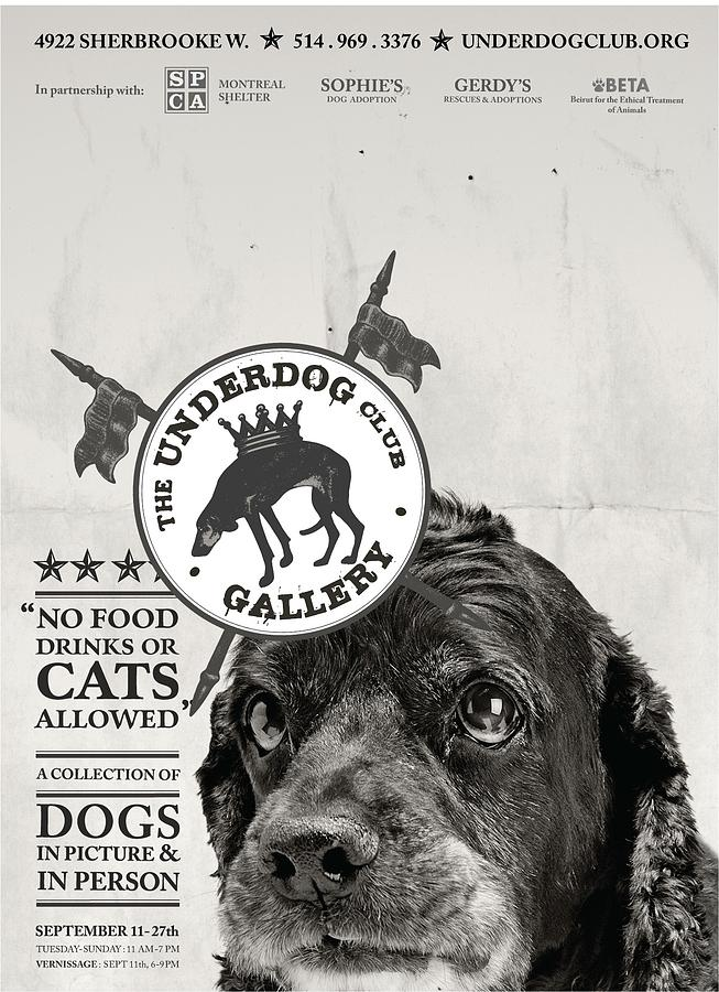 Dogs Photograph - Underdogs - No Food  by Anonymous