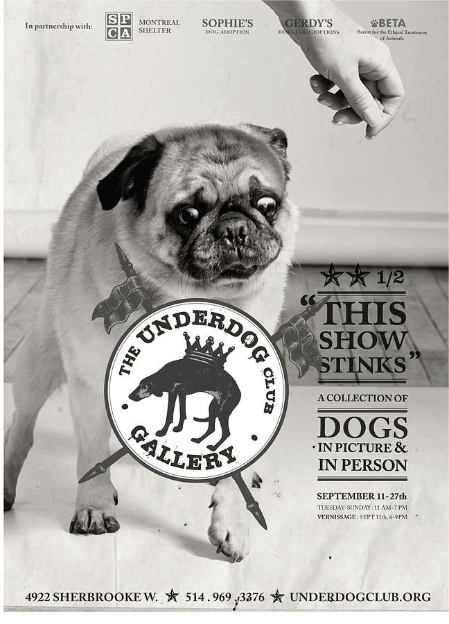 Dogs Photograph - underdogs - Stinks by Anonymous