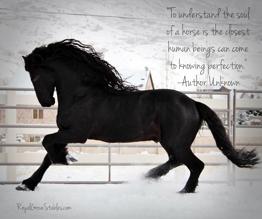 Understand the Soul of a Horse by Carol Whitaker