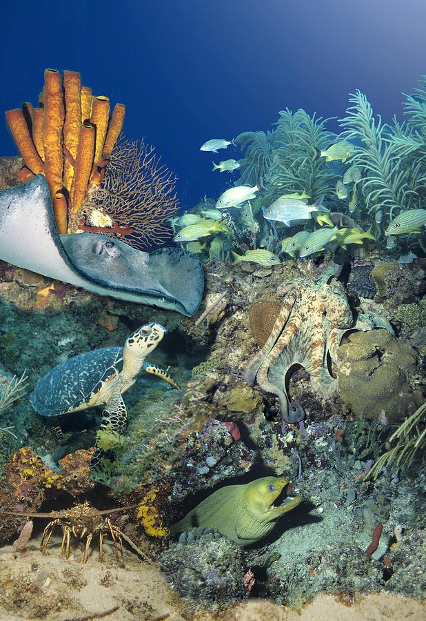Sea Turtle Digital Art - Underwater Collage by Richard Nickson