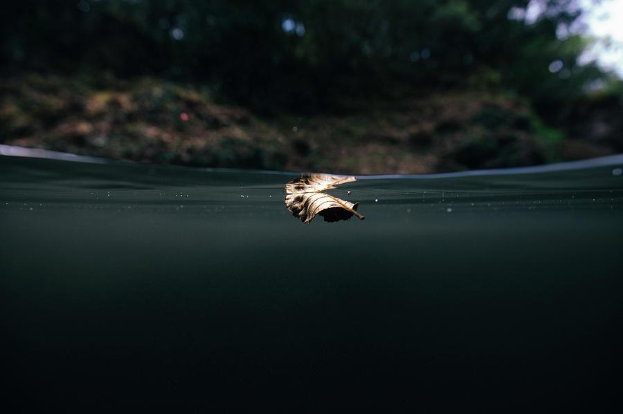 Underwater Photograph - Underwater Leaf by Gemma Silvestre
