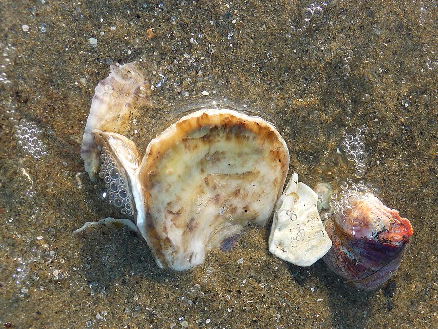 Seashells Photograph - Underwater Treasures by Margie Avellino