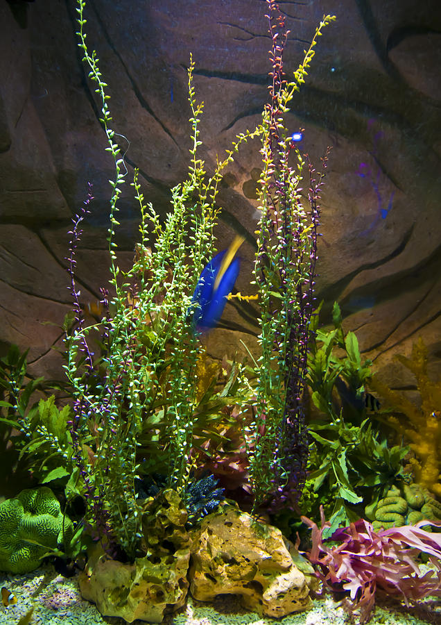 Aqua Photograph - Underwater03 by Svetlana Sewell