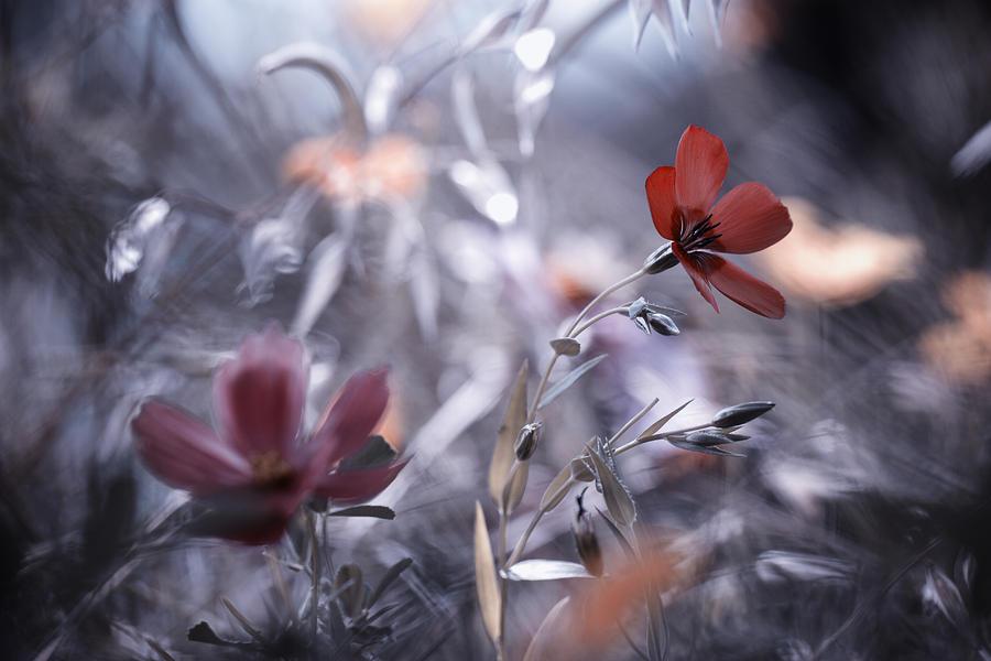 Flower Photograph - Une Fleur, Une Histoire by Fabien Bravin