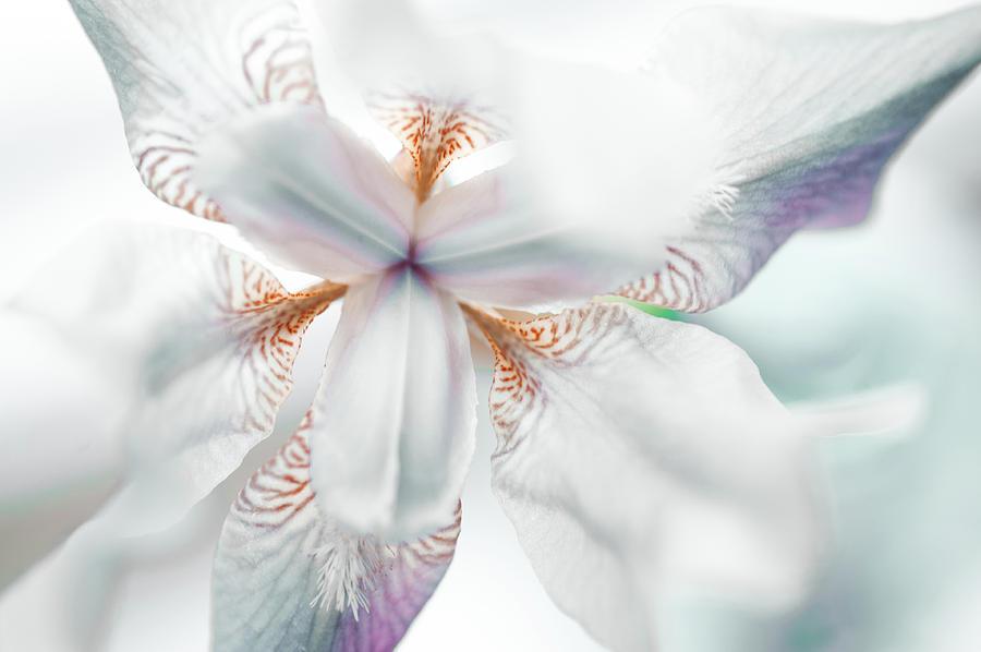 Iris Photograph - Unearthly by Jenny Rainbow