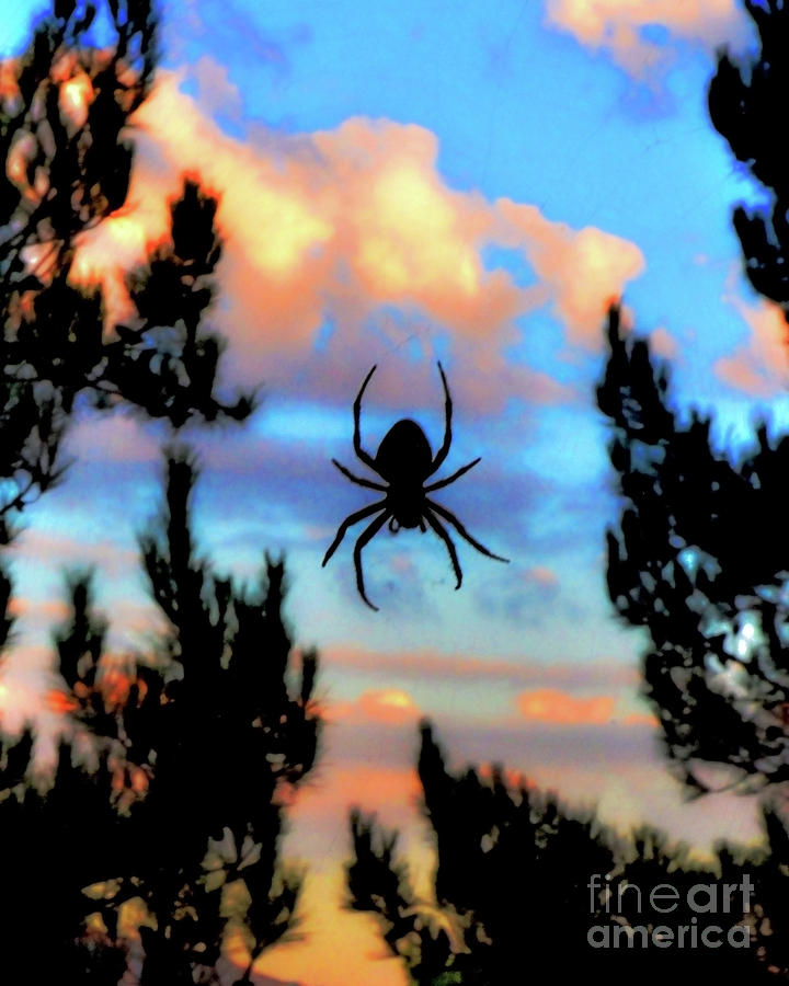 Spider Photograph - Unexpected Beauty by Third Eye Perspectives Photographic Fine Art