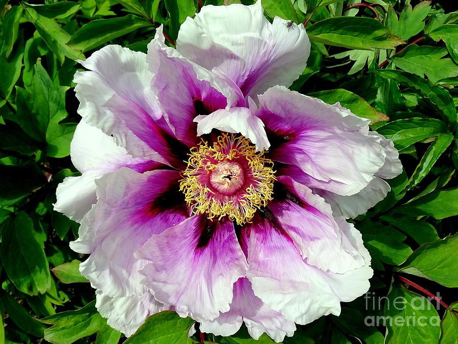 Flowers Photograph - Unfolding Beauty by Ed Weidman