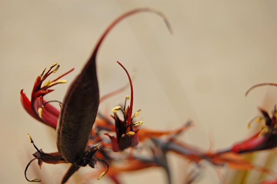Unique Botanics I Photograph