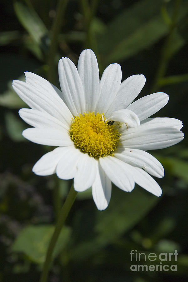White Flower Photograph - Unique by Madelin Zaycheck