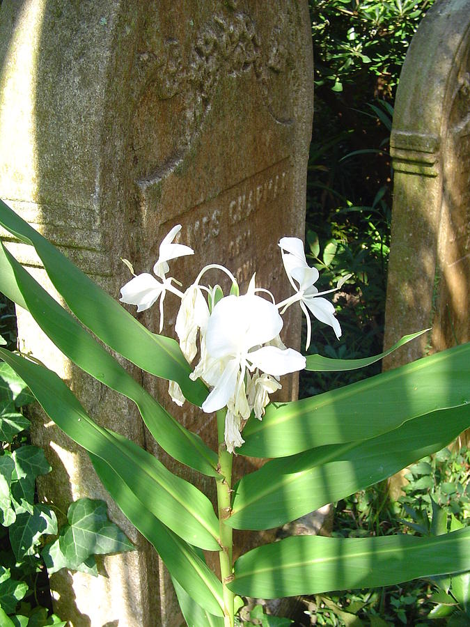 Flower Photograph - Unitarian Church Cemetery by Richard Marcus