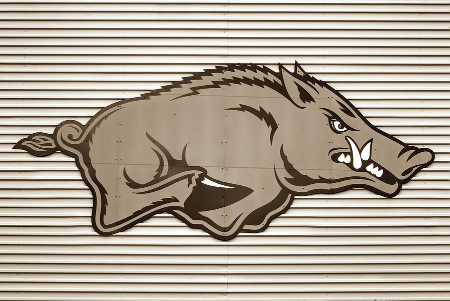 University Of Arkansas Razorback On Metal - Sepia Edition Photograph