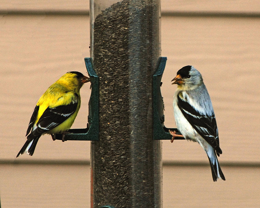 Bird Photograph - Unmatched Pair by Wilbur Young