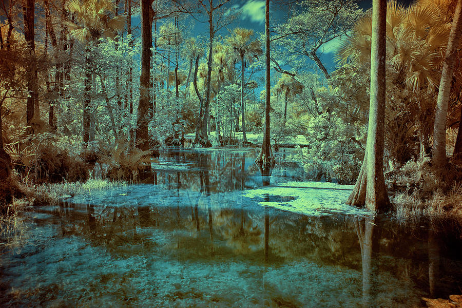 Cypress Trees Photograph - Unseen Wetland by Roberto Aloi
