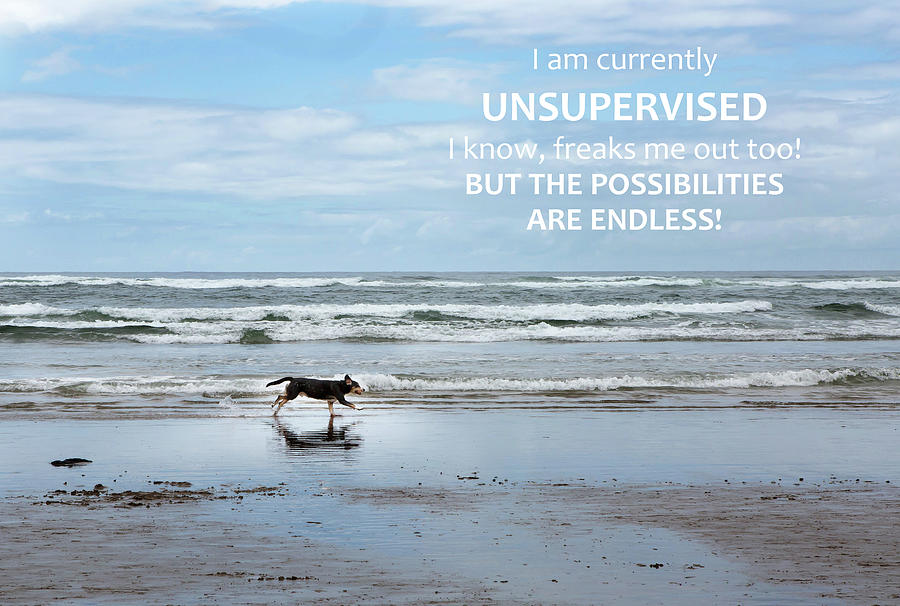 Dog Photograph - Unsupervised by Rebecca Cozart