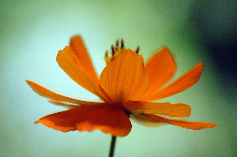 Flower Photograph - Untitled by Lucas Armstrong