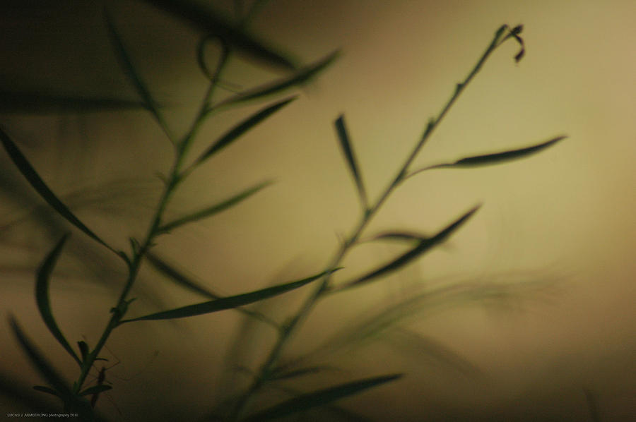 Nature Photograph - Untitled Panel 1 Of 2 by Lucas Armstrong