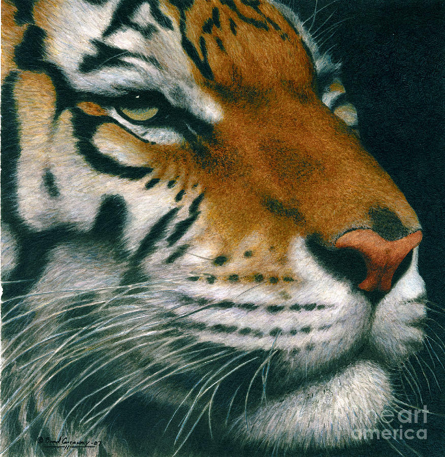 Tiger Painting - Untitled Tiger by Brad Carraway